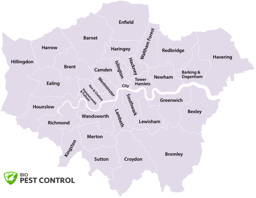 Pest Control Near Me in London?