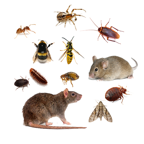 Pest Treatment in London